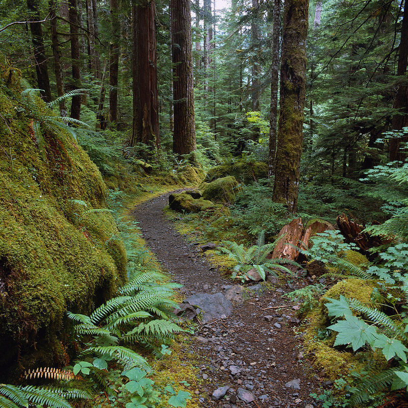 Rugged_Mossy_Forest_Path_S