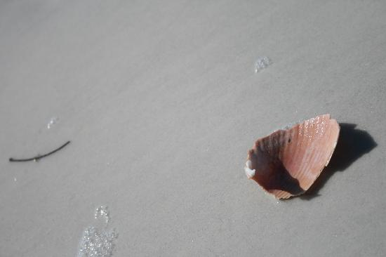 Awesome-shells