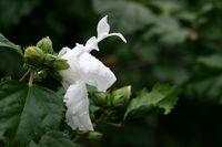 Spring rain white flower