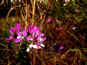 Wild flower photo-painting