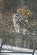 Regal Owl