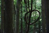 Forest noose