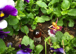 Pansies & fairy - erie chapman (1)
