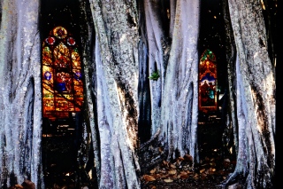 Church in trees