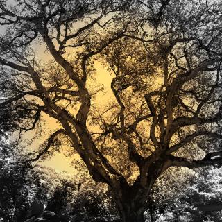 Tree one