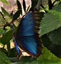 Butterfly 14