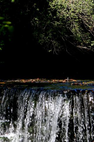 Bright water dark wood