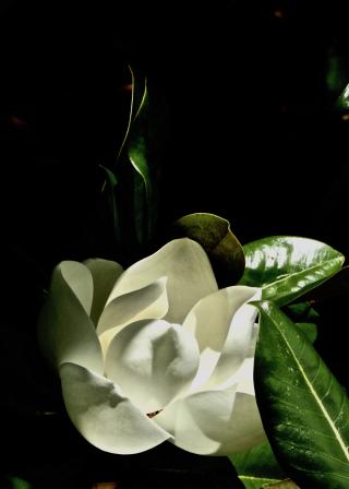Magnolia Nights 2 - erie chapman
